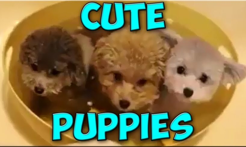 Cute Puppies Videos Compilation 2017 | Cutest Puppies