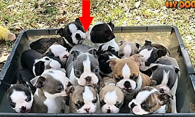 Cutes Puppies | Cutest Puppies in the world | Cute Puppies clips 2018