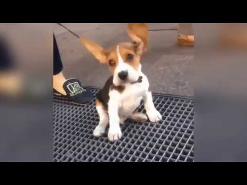 Cutest Puppies GIF Compilation