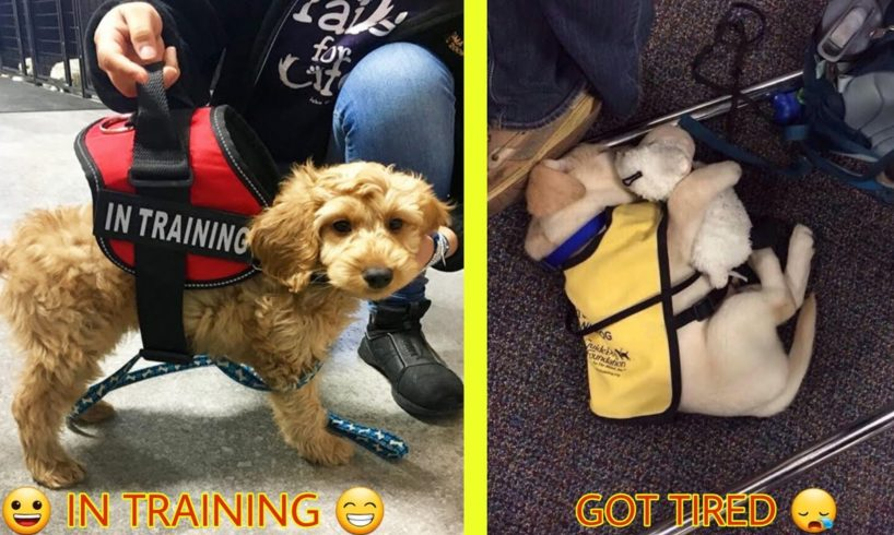 Cutest Puppies On Their First Days Of Work That Will Make Your Day