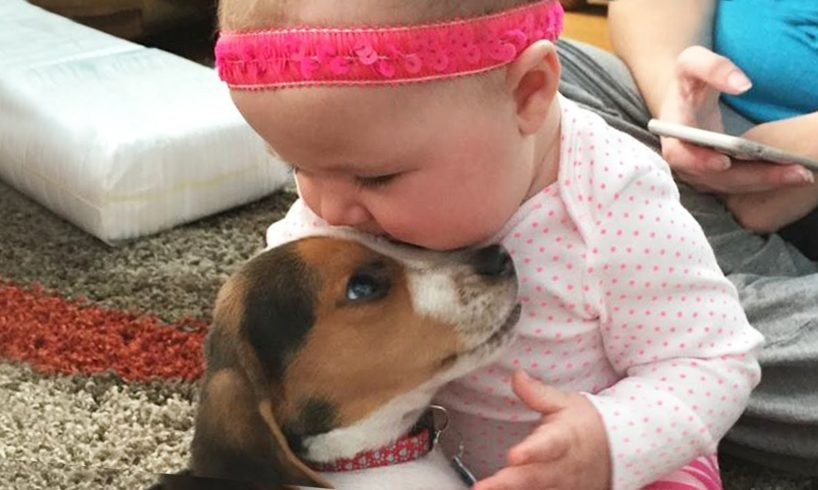 Cutest Puppies Playing With Baby - Funny Baby Videos