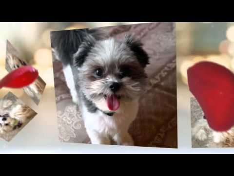 Cutest Puppies Video - Share the Love this Valentine's Day on Talent Hounds