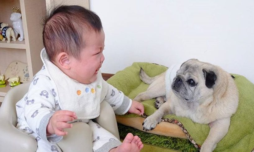 Cutest & Funniest Babies Playing With Cute Puppies & Dogs - Babies Funny Video with Funny Dogs