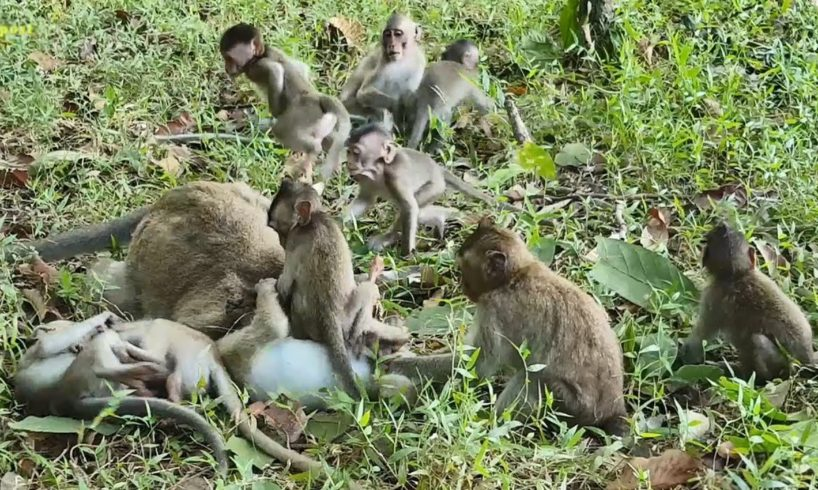 Cutest moments of how lovely baby monkeys playing, adorable baby animals playing funny videos