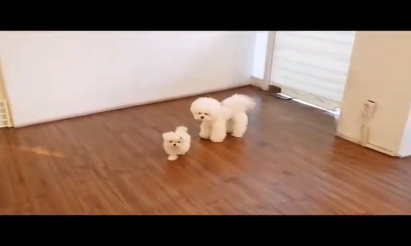Cutest puppies in the world