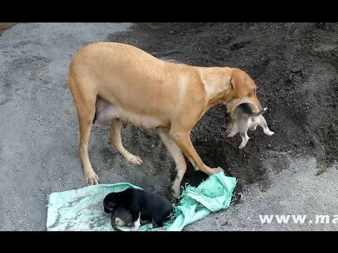 Dog Saves Newborn Puppies |  CUTE PUPPIES