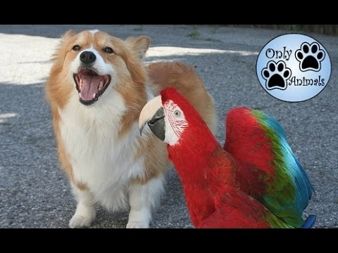 Dogs and parrots playing - Compilation //  Only Animals