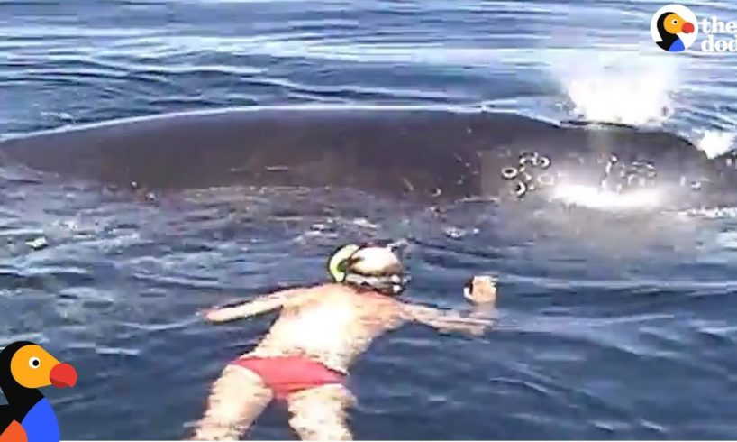 Family Rescues Whale Tangled In Net    The Dodo