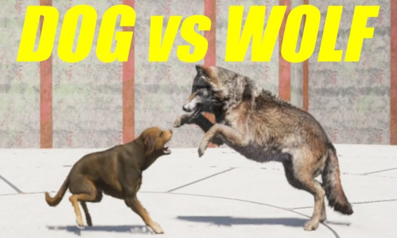 Far Cry 5 Arcade - ANIMAL FIGHT: DOG vs WOLF (Map Editor)