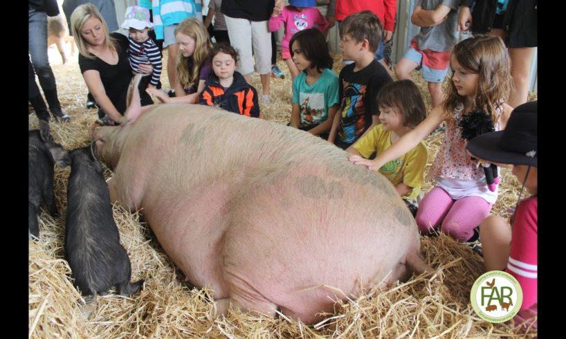 Farm Animal Rescue -  A Very Piggy Christmas - 2014