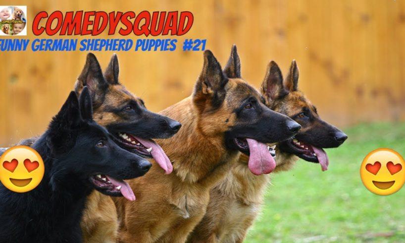 Funny German Shepherd Puppies Video #21 Funniest & Cutest Puppies Compilation