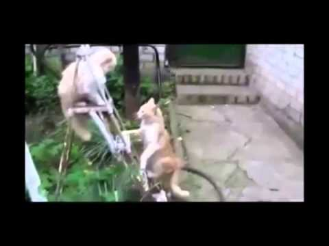 Funny animals songs funny animals playing dead