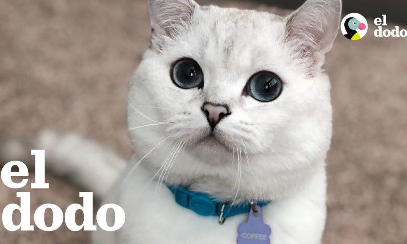 Gato bello con ojos que parecen diamantes 💍 | El Dodo
