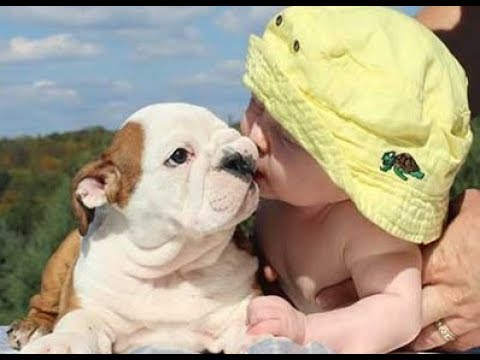 Hilarious Bulldog Puppies and Babies playing together - Cutest Puppy and Baby Ever