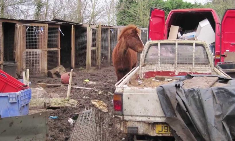 Horses rescued from Crunchies Animal Rescue Sanctuary are still recovering