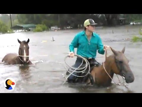 Hurricane Harvey Animal Rescue | The Dodo