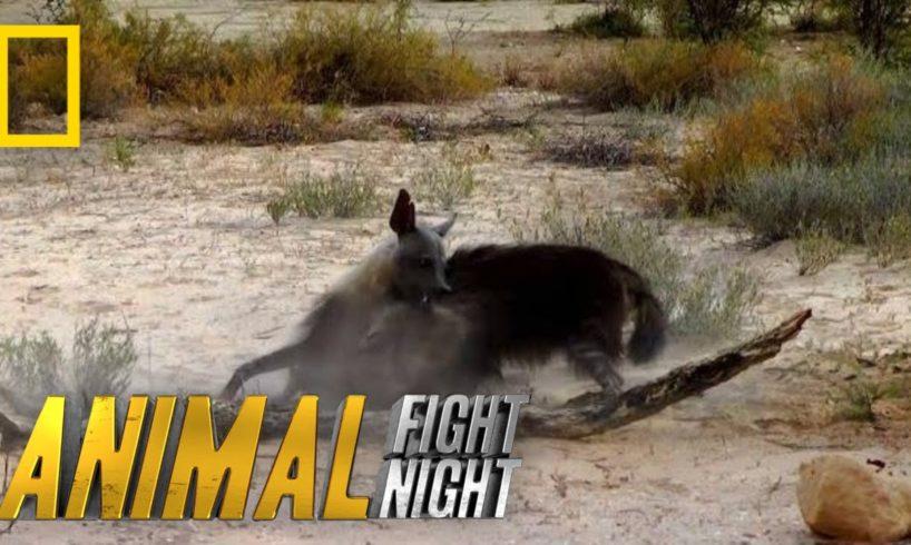 Hyena v. Hyena: Battle For Territory | Animal Fight Night