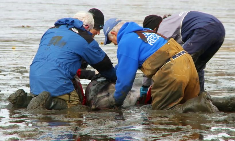 IFAW Rescues Animals in Trouble