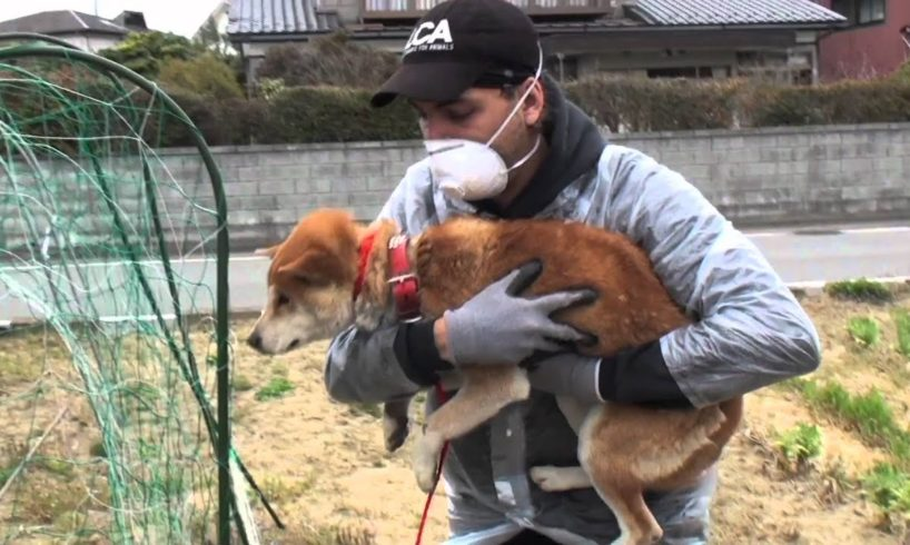 Last Chance for Animals - Japan Rescue Video