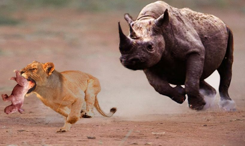 Lion vs Rhino - Most Amazing Moments Of Wild Animal Fights 2018   Wild Discovery Animals