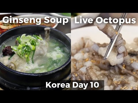 Live Octopus & Chicken Ginseng Soup (Day 10)