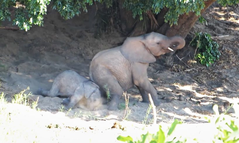 Mommy elephant teaches baby how to dust bath   Funny wild animals, play in a riverbed - Kruger Park
