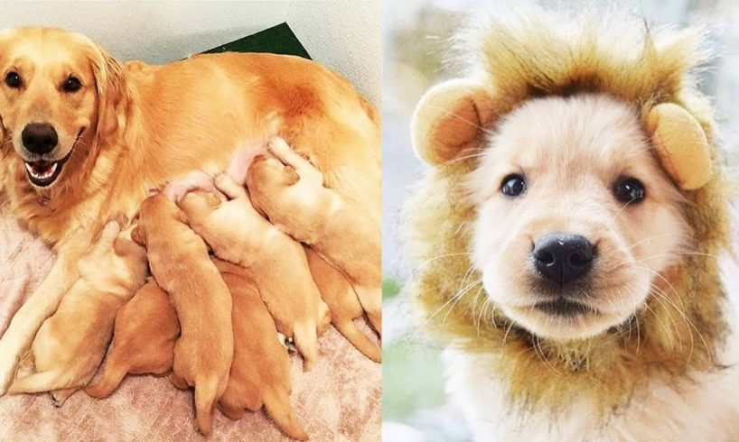 Mother Dogs and Cute Puppies Videos Compilation, Cute moment of Puppy - Cutest Animals! #3