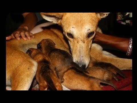 Orphaned puppies meet their new mom - Animals Rescued  Ep 141