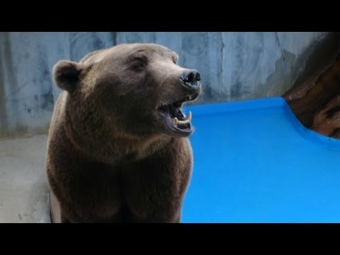 PETA Rescues 17 Bears From Concrete Pits | PETA Animal Rescues
