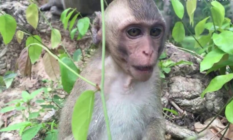 Pets and Animals Channel | The funny baby monkey are playing with their relative