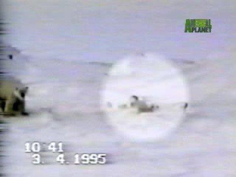 Polar Bear Cub Rescue