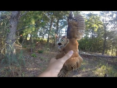 Rescuing a screech owl tangled in fishing line, New Jersey - 09/06/2015