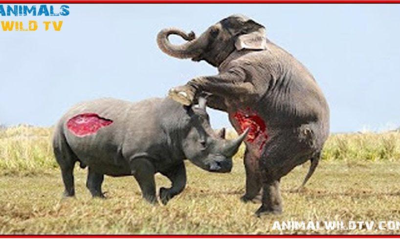 Rhino vs Elephant, WIld Boar vs Crocodile, Best Moments Wild Animal Fights - Animal Wild TV