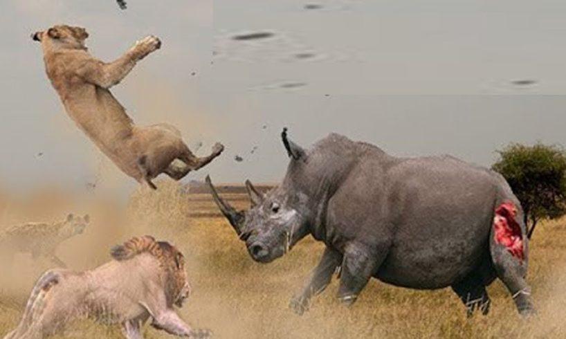 Rhino vs Lion Fight   Most Amazing Wild african animals Attacks   Animal Fights HD