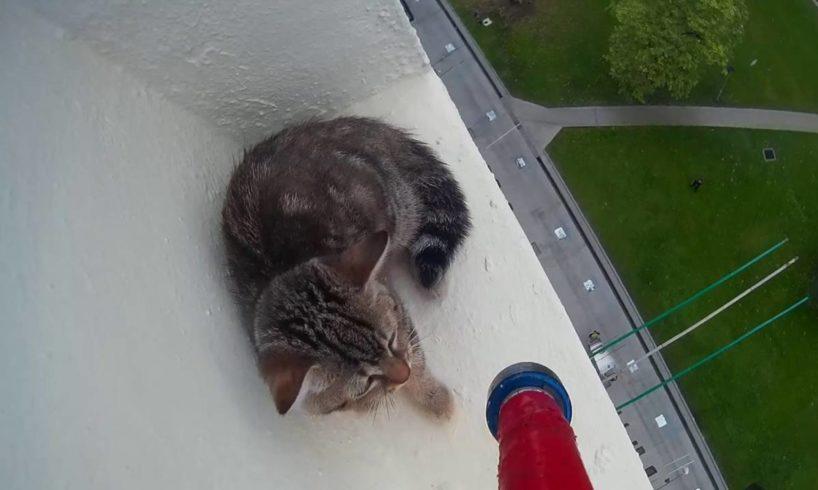 SPCA Rescues Kitten