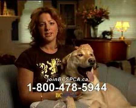 Sarah McLachlan Animal Cruelty Video