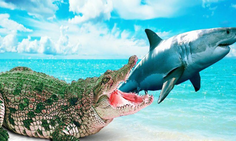 Shark Vs Crocodile Attack Marmaid Color Dinosaurs Animal Fights Cartoon for Children Kids Short Film