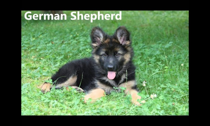 TOP 15 CUTEST PUPPIES