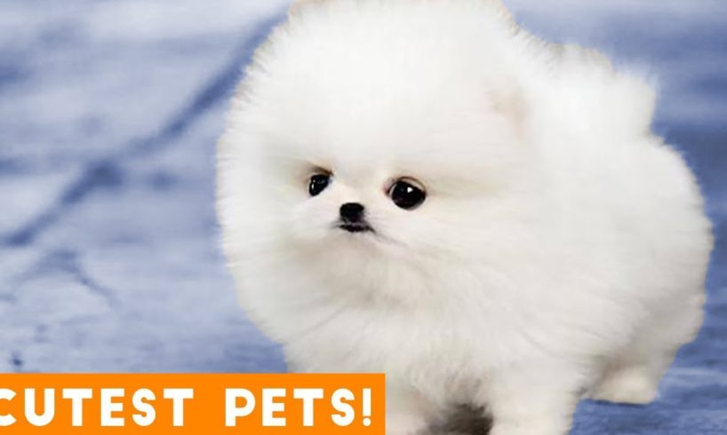 The Cutest Pets of All Time Comp #1 March 2018 | Funny Pet Videos Monthly Montage ft. Dogs & Cats