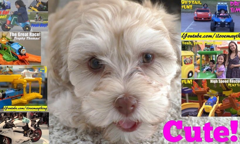 The Cutest Puppies Ever! Thomas the Tank Engine, Power Wheels Cars, Toy Cars and Kiddie Rides