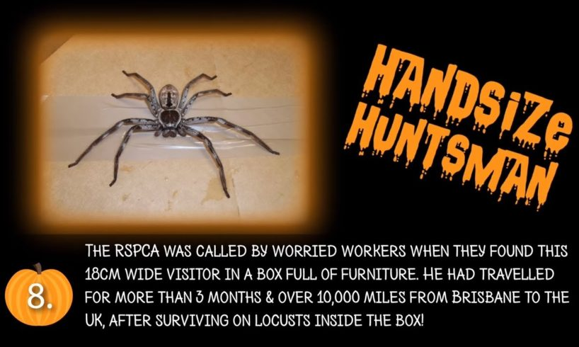 The top 5 scariest RSPCA animal rescues