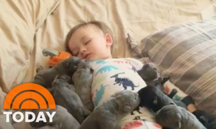 This Baby Snuggling A Pack Of Cute Puppies Is Guaranteed To Make Your Day | TODAY