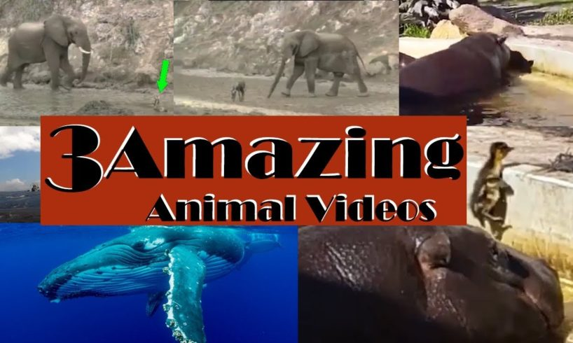 Three Amazing Animal Videos | unbelievable rescues | WATCH THIS!