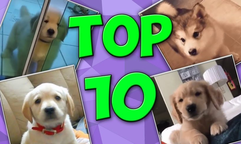 Top 10 Cutest Puppies - Cute Puppies Compilation