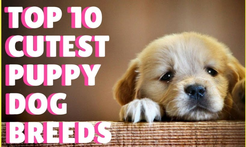 Top 10 Cutest Puppy Dog Breeds In The World / Super Cute Puppies