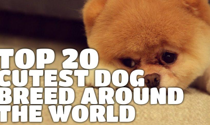 Top 20 Cutest Dog Breed Around The World