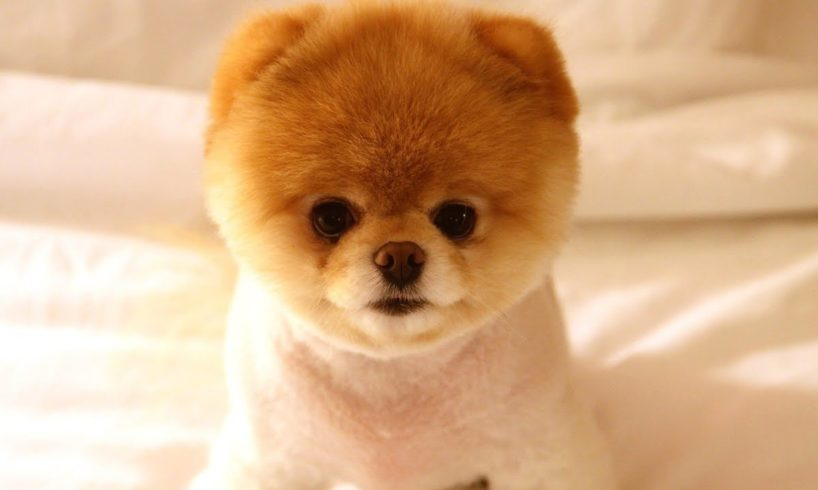 Top 7 Cutest Puppies in the world