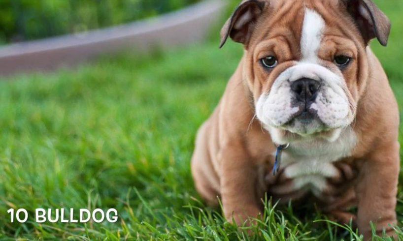 Top Ten Cutest Puppies