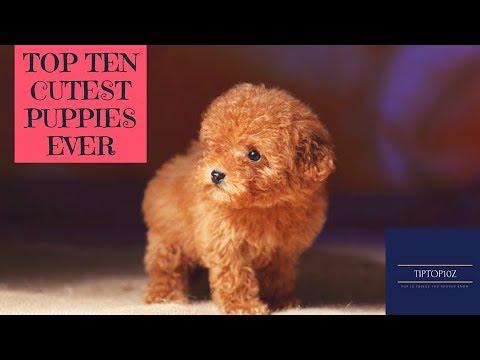 Top ten cutest puppies ever