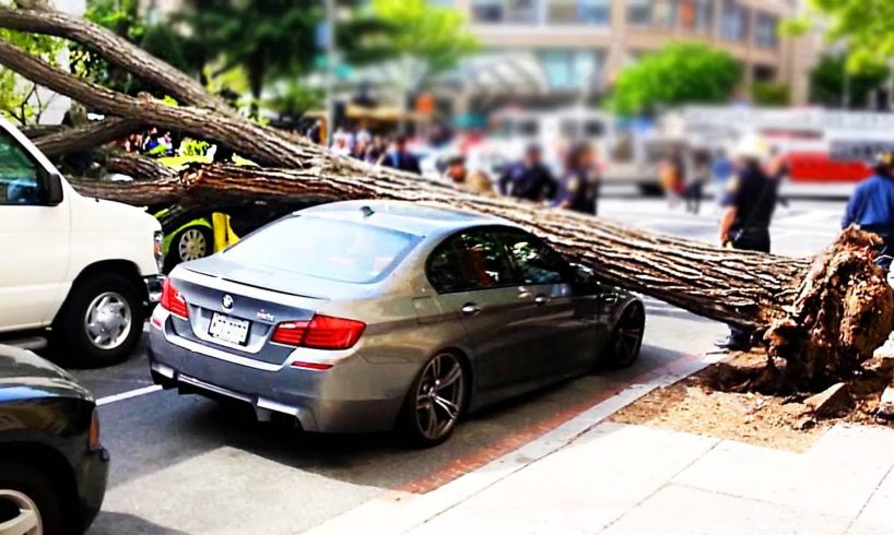 Trees vs Cars - Trees falling on Cars compilation